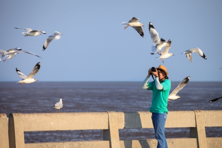 Photographer taking seagulls photo Stock Photo - 14268767