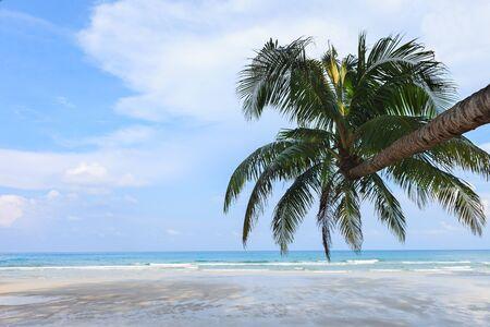 Coconut Tree on the beach, Koh Kood Island, Thailand photo