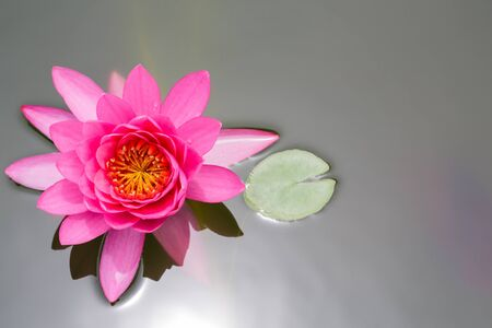 pink lotus: Top view of Beautiful Pink Lotus in pond Stock Photo