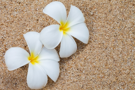 Frangipani flower on sand, Maybe use as background photo