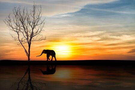 mourning: Silhouette elephants over sunset with reflection