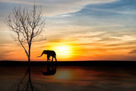 luto: Silueta de elefantes más de la puesta del sol con la reflexión