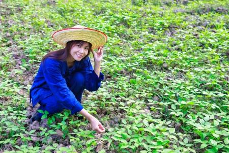 agriculturist: Asian women working in peanut field