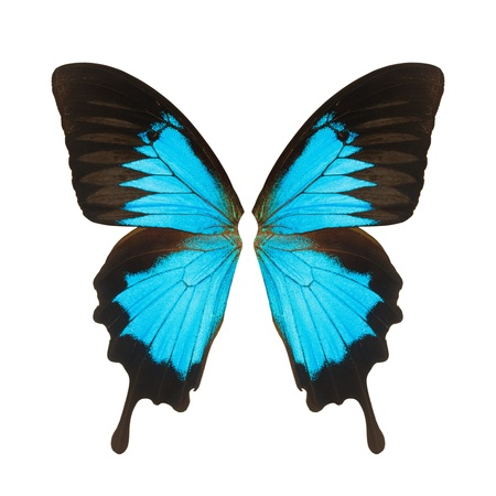 Butterfly wing, Isolated on white background Stock Photo - 16014036