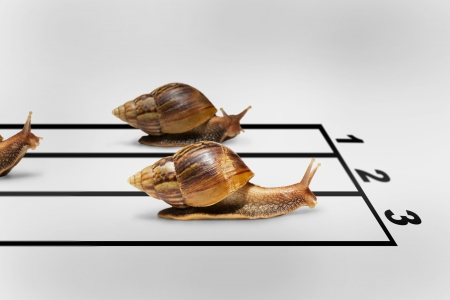 Three snails racing on grey background with shadow photo