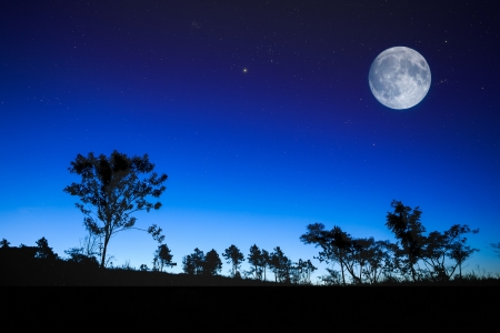 dark forest: Night sunrise landscape with the moon, trees silhouette, stars Stock Photo