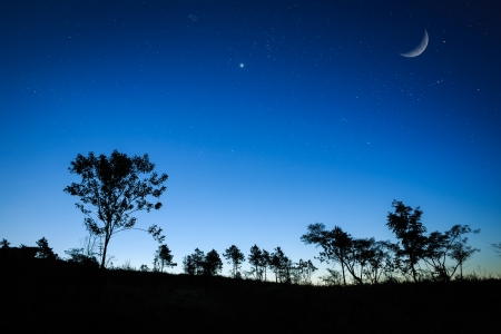 Night sunrise landscape with the moon, trees silhouette, stars photo