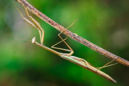 alien face: Closeup mantis