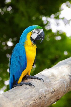 Macaw sitting on branch photo
