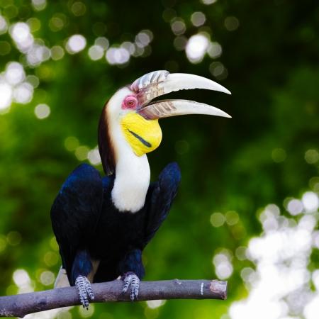 Closeup hornbill, Nature background Stock Photo - 19630101