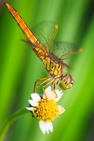 Closeup dragonfly resting on flower photo