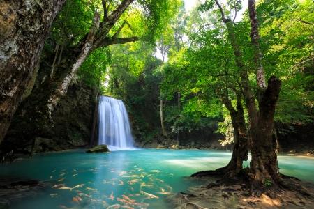 koi fish: Deep forest Waterfall in Kanchanaburi, Thailand
