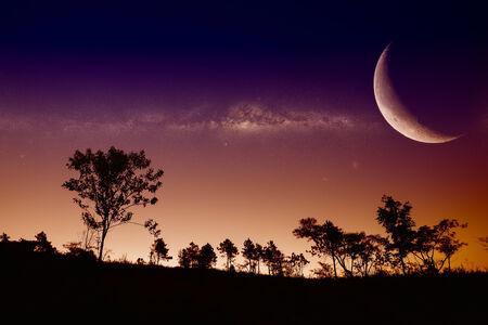 Tree silhouette nature  photo