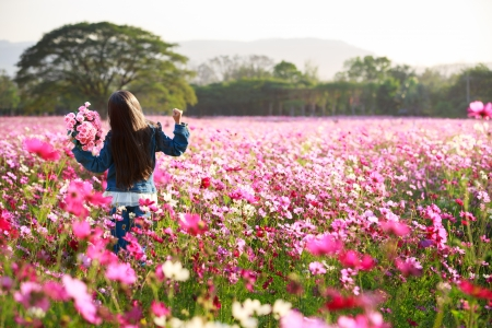 Little asian girl standing in cosmos flower fields photo