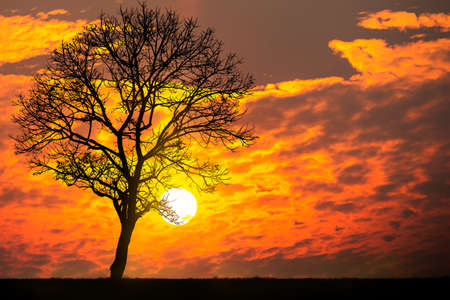 forground: Sunset with a dead tree in the forground Stock Photo