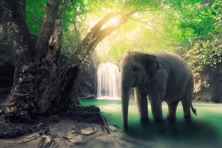 Elephant at waterfall Imagens