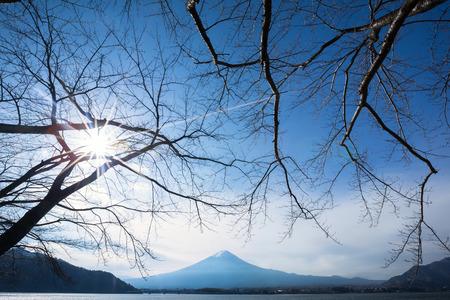 Oishi Park, Japan photo