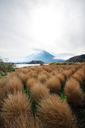 kawaguchi: Mountain fuji in autumn, kawaguchi lake, Japan