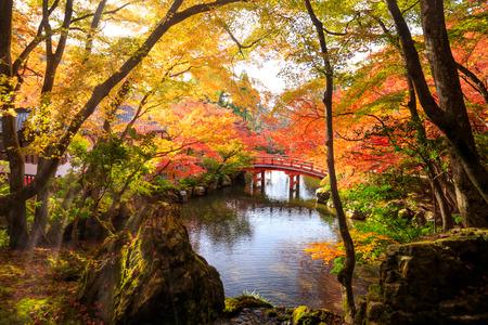 日本の秋の公園