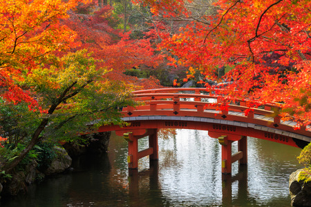 japanese fall foliage: Wooden bridge in the autumn park, Japan Stock Photo