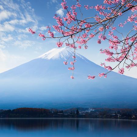 Mt. fuji e fiori di ciliegio nel lago Kawaguchiko