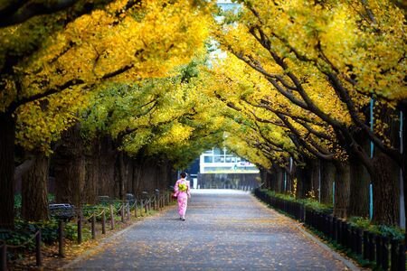 Woman in kimono walking along an avenue lined with ginkgo trees