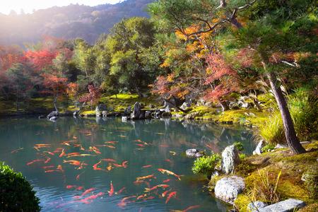 Zen garden of the tenryu-ji temple, Arashiyama Kyoto Japan