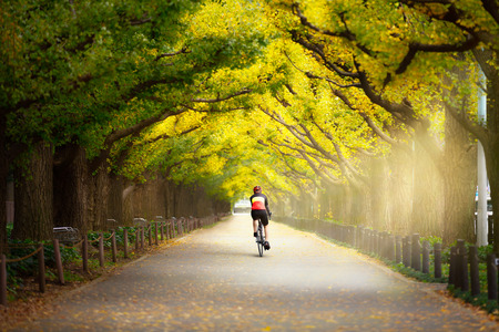 biker man: Cyclist on the beautiful gingko trees at the street of Gingko trees, Tokyo Japan, Cyclist ride the bike exercise on nature concept Stock Photo