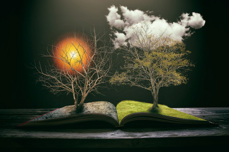 knowledge tree: Different side is desert with a dead tree, Concept of changes. Stock Photo