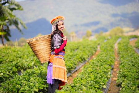 Mała Hill Tribe rolnik stoi na farmie pola truskawkowego
