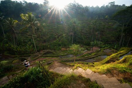 The sun rises over the green fields of the Tegalalang rice terraces in the heart of Bali, Indonesia. Standard-Bild