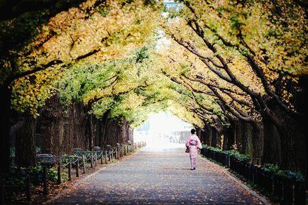 Woman in kimono walking along an avenue lined with ginkgo trees Standard-Bild - 131430887