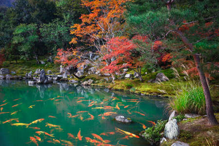 Autumn landscape, Japan Reklamní fotografie