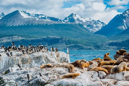 Island of the wolves in the Beagle Channel