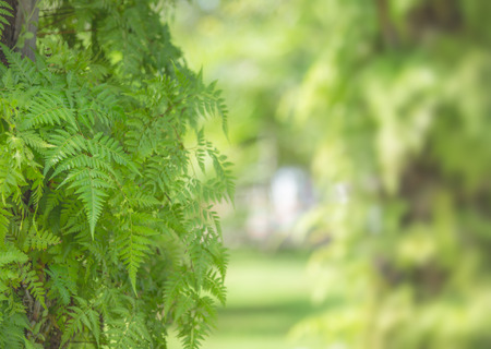 Fern plant and leafs with blurred green nature background