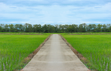 Thai country road among natural green rice fields, trees with blue sky. Stock Photo