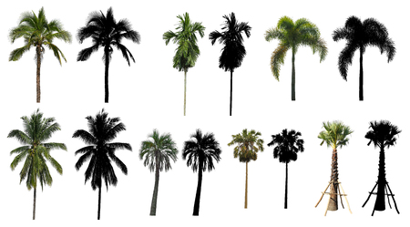 A natural coconut palm trees collection set with black alpha mask isolated on white background.