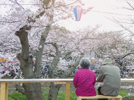 2016 April 03. Chiba Japan. A couple of old person enjoy in japnese traditional cherry blossom sakura festival, Hanami matsuri at Ebikawa Funabashi city.