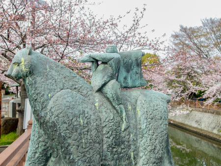 2016 April 03. Chiba Japan. A Japanese legend character KINTARO statue with blurred full blooming cherry blossom sakura trees as background.