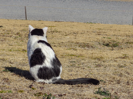 adorable cat standing on the dry yellow grass. 스톡 콘텐츠