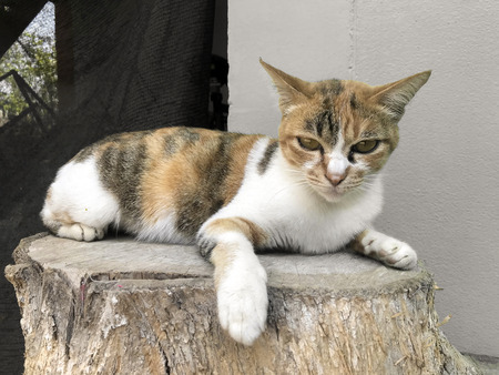 a lovely cat sitting on timber wood. Imagens