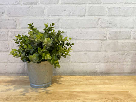 small green plant on steel pot with copy space brick wall background.