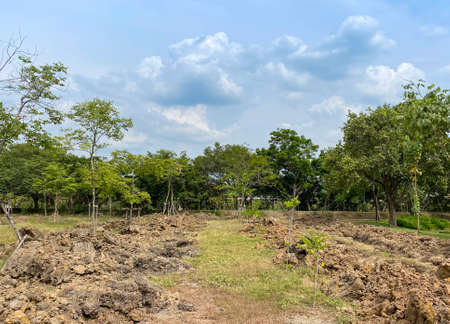 preparing agriculture ground farm surrounded by green forest tree outdoor park.