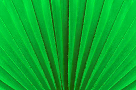 Natural green leave surface texture background.