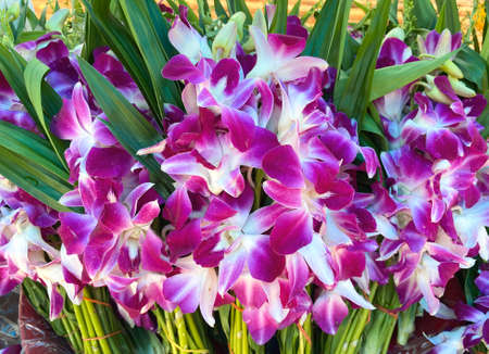 Natural purple white orchids stacks for sell.
