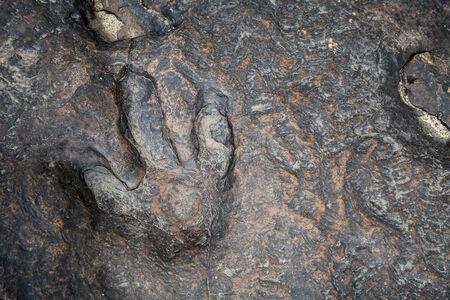 footprints: dinosaur footprints in kalasin thailand Stock Photo