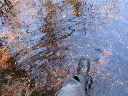 wading: Wading in the pond