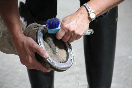 hoof: Hoof cleaning