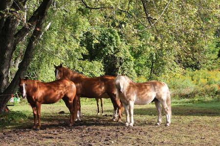 Three horses in sunlight