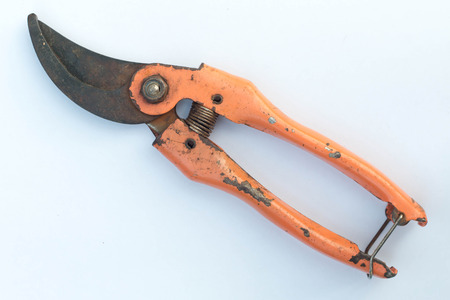 trimming scissors: Scissors is cutting branches from tree, trimming Stock Photo